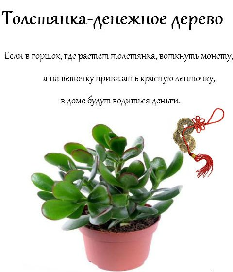 Стихи к подарку денежного дерева 123
