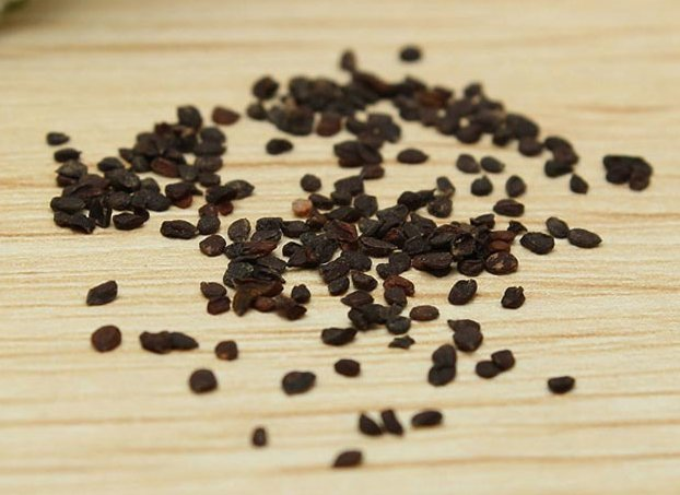 Выращивание обриеты из семян и пересадки в открытый грунт