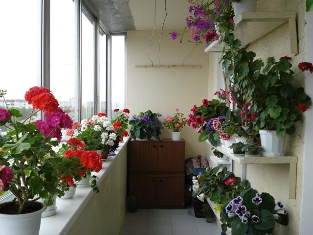 Какие цветы посадить на балконе дома domogorodnika.ru.
