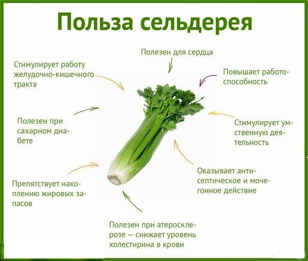 сельдерей от холестерина
