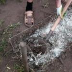 Что нужно знать о раскислении почвы