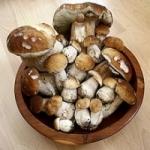 Выращивание грибов дома, на даче, условия выращивания