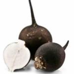 Черная редька - полезные свойства и агротехника выращивания