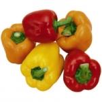 Выращивание перца сладкого в теплице или открытом грунте