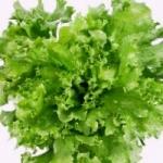 выращивание зелени зимой