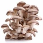Выращивание грибов вешенка в домашних условиях
