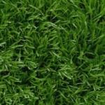 Газонная трава - когда сажать и как ухаживать