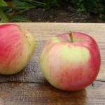 Яблоня Мельба - описание сорта
