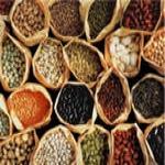 Бобы - сорта бобов, применение