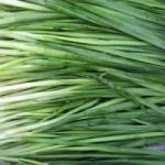 Выращивание зеленого лука на перо в теплице
