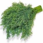 Укроп - выращивание укропа в теплице или открытом грунте