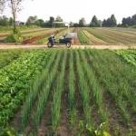 Фермерство - перспективное направление
