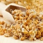 Как прорастить пшеницу для приема в пищу