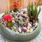 Домашниее суккуленты и кактусы. Фото и названия