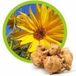 Топинамбур - полезные и лечебные свойства