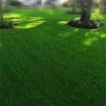 Организуем зеленый газон в саду