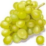 Агротехника винограда - выращивание винограда в средней полосе; выращивание из ч