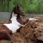 Как правильно использовать навоз для удобрения почвы