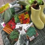 Основные моменты выращивания рассады