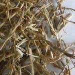 Солянка холмовая - полезные свойства