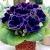 Глоксиния – посадка и уход за цветком