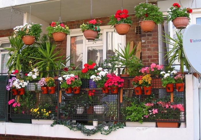 Как превратить дом в цветущий оазис с помощью смартфона?